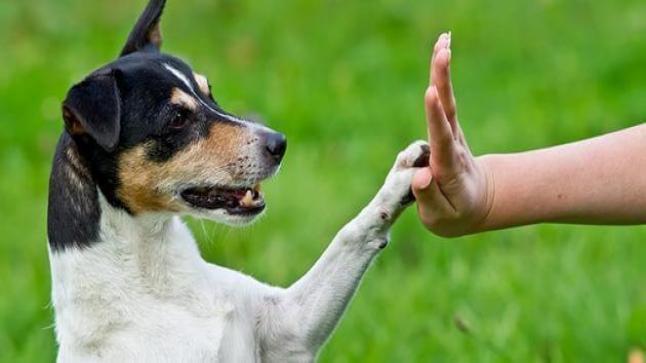 حكم تربية الكلاب في الإسلام